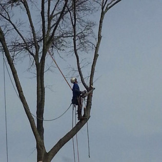 emergency tree removal french camp ms