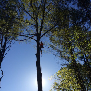 emergency tree removal starkville ms
