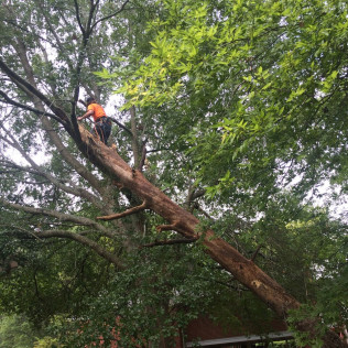 tree care services starkville ms