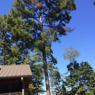 tree care starkville ms