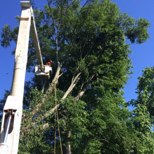 tree removal louisville ms