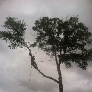 tree service louisville ms