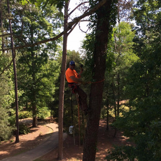 tree removal french camp ms